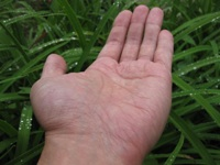 Franklin's palm